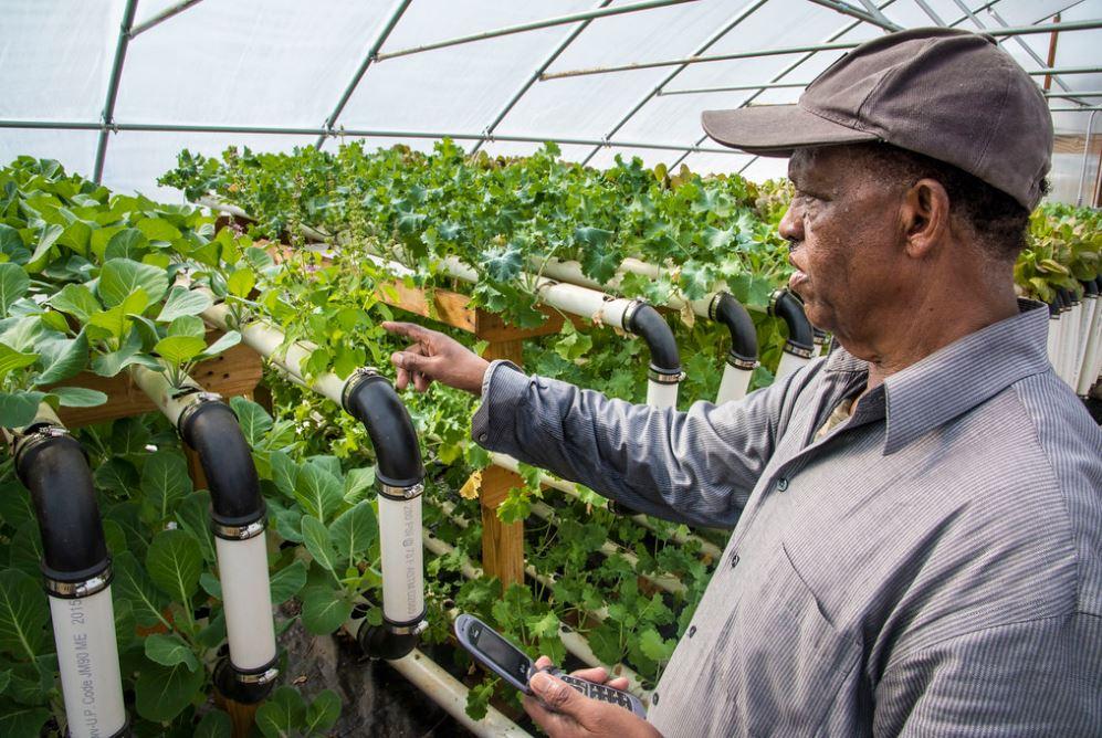 điều khiển hệ thống tưới nước tự động bằng internet vạn vật